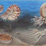 Fond marin au Lias