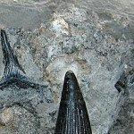 Restes de vertébrés marins du Keuper