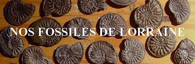 Nos fossiles de Lorraine