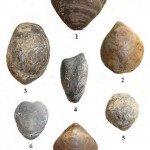 <b>Lias 01 (Anthozoaires et brachiopodes)</b> <br />
