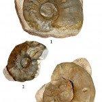 <b>Trias 03 (Cératites)</b> <br />